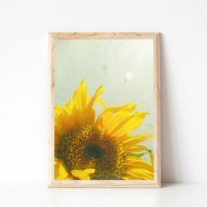 Sunburst Photographic Sunflower Print