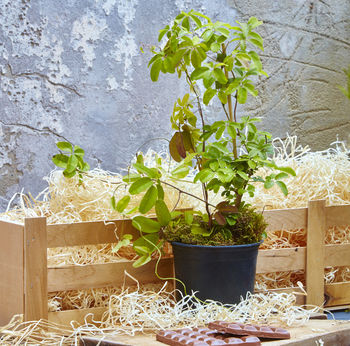 Chocolate Vine Gift Crate