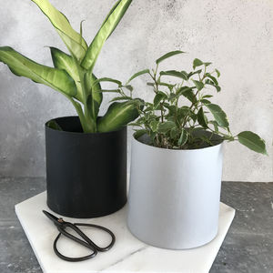 Mini House Plant Selection - flowers, plants & vases