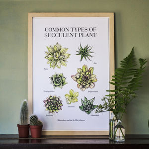 Succulents: Illustrated Limited Edition Art Print - nature & landscape
