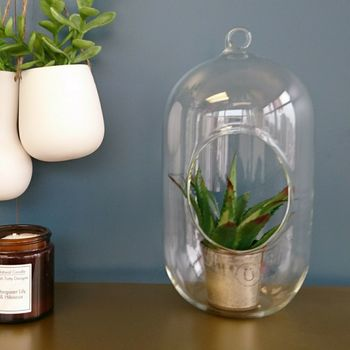 Hanging Glass Bell Terrarium