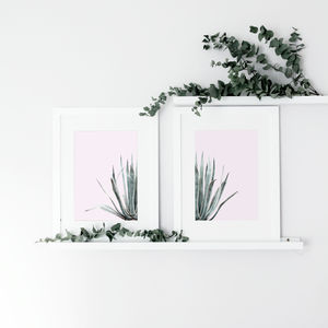 Set Of Two Cactus Plants On Pink Print - new in prints & art