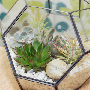 Air Plant, Succulent And Cacti Mixed Terrarium - flowers, plants & vases