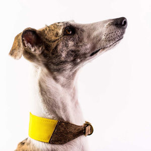 Personalised Cork And Felt Greyhound Dog Collar - new in pets