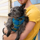 Shuka Blue Dog Bandana