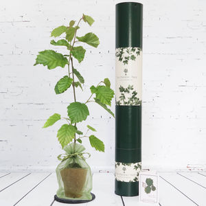 Truffle Tree Gift - gifts for him