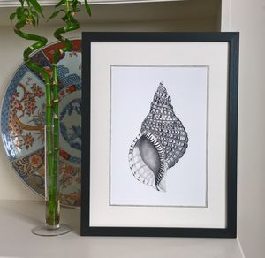 Framed Limited Edition Triton Shell Giclee Print - paintings