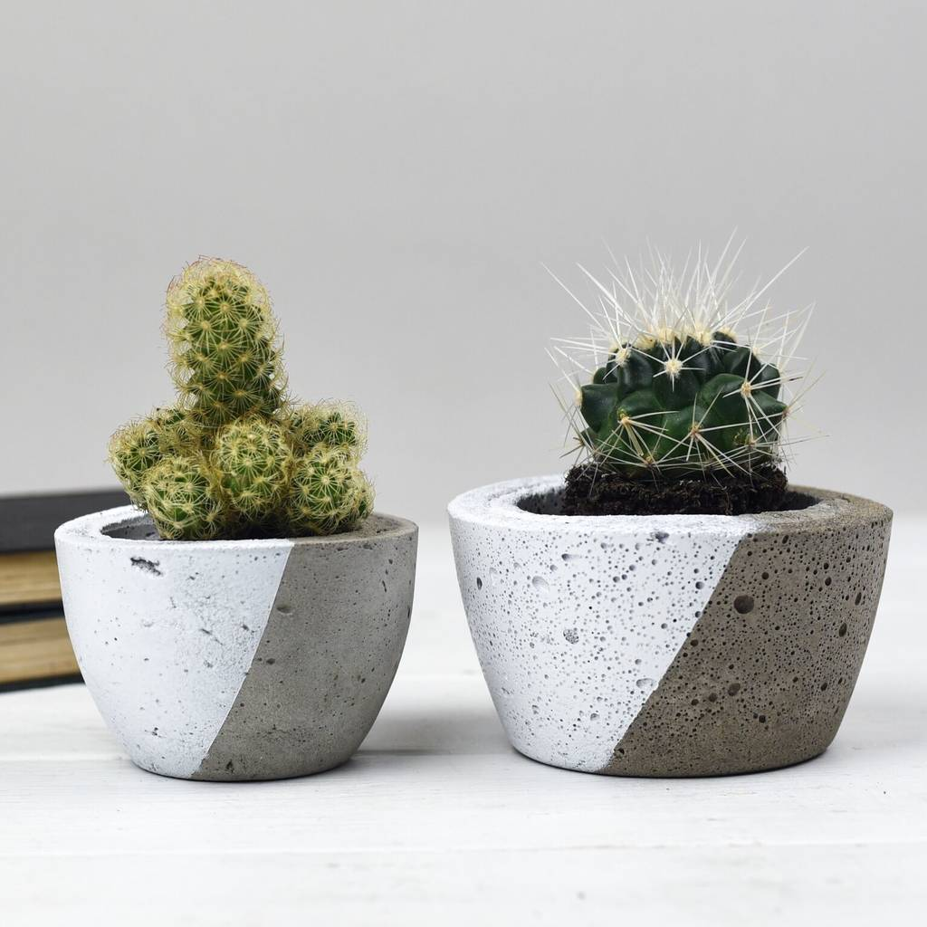 Mini Concrete Planters : Diagonal colour concrete planter by bells and whistles