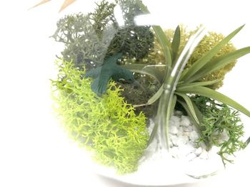Bird Air Plant Terrarium Kit