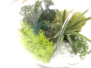 Bird Air Plant Terrarium Kit - home accessories