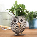 Wicker Walking Owl Planter