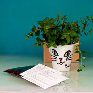 Personalised Cat Treat Growing Kit Plant Pot - gardening