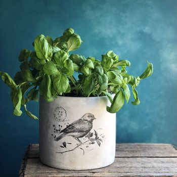 Concrete Large Bird Plant Pot