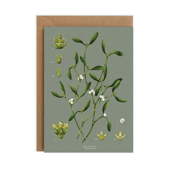 Botanical Christmas Card, Mistletoe