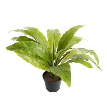Asplenium Artificial House Plant