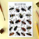 Bees Of Britain Illustrated Postcard