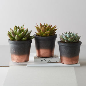 Midi Concrete + Copper Plant Pot With Plant