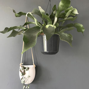 Staghorn Fern Hanging House Plant - home accessories