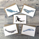 Whales Greeting Card Notelets Pack Of Five