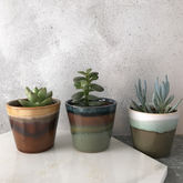 Mini Succulent In Glazed Stoneware Pot - what's new