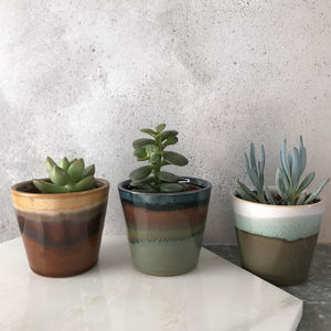 Mini Succulent In Glazed Stoneware Pot - gifts for him