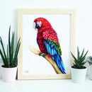 Macaw Parrot Illustration Print