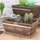 Painted Wooden Planter with Cactus Plant Pots