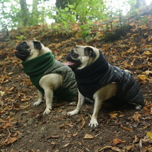 Waterproof Quilted Snood Dog Jacket - dogs