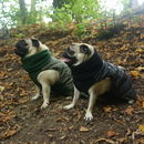 Waterproof Quilted Snood Dog Jacket