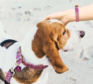 The Mischief Maker Dog Collar And Matching Bracelet - what's new
