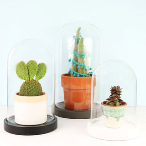 Glass Jar Dome With Base - decorative accessories