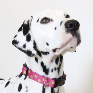 Nancy Spotty Dog Collar - dog collars