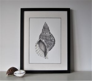 Framed Limited Edition Triton Shell Giclee Print - still life