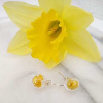Yellow Daffodil Petal And Sterling Silver Studs