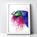 Peacock Flying No2 Splash Illustration Print
