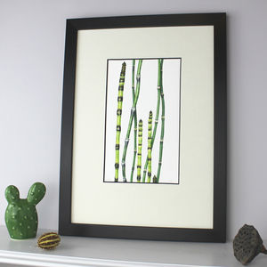Ornamental Grass Botanical Art Limited Edition Print - posters & prints