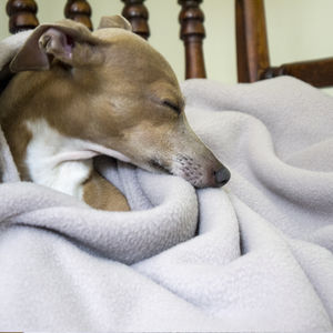 Luxury Double Fleece Pet Blanket - blankets & throws