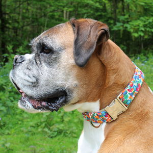 Shlee Liberty Fabric Dog Collar