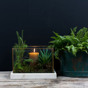 Brass And Marble Terranium