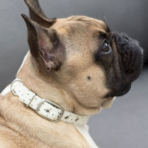 Cream Dot Dog Collar - dog collars
