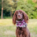 Aubrey Anemone Floral Dog Collar Puppy Flower Crown