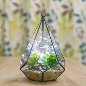 Diamond Succulent Terrarium With Christmas Fairy Lights - flowers, plants & vases