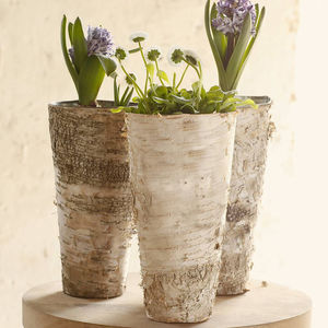 Imperfect Birch Bark Vase - dining room