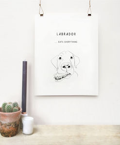 The Labrador - drawings & illustrations
