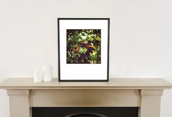 Maple Leaves Photographic Art Print
