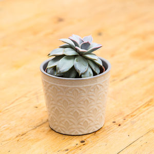 Cream Ceramic Patterned Plant Pot - pots & planters