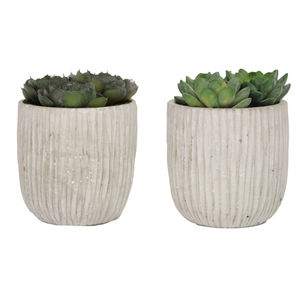 Artificial Succulent Plants In Concrete Pot - home accessories