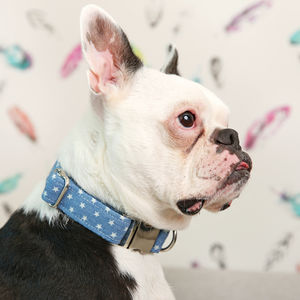 Denim Star Dog Collar - dog collars
