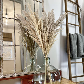 Dried Fluffy Pampas Grass Bunch