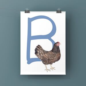 Chicken Alphabet Art Print, B Is For Barnevelder